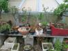 Vzgoja bonsajev